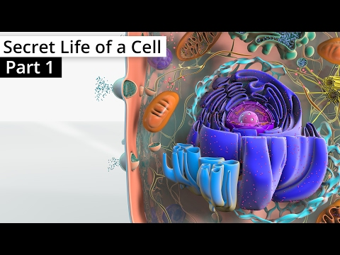 the-secret-life-of-a-cell,-part-1---organelles