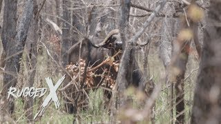 Cape Buffalo of the Selous