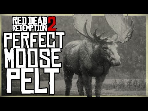 HOW TO GET A PERFECT MOOSE PELT – RED DEAD REDEMPTION 2 PRISTINE MOOSE HUNT