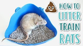 HOW TO LITTER TRĄIN RATS!