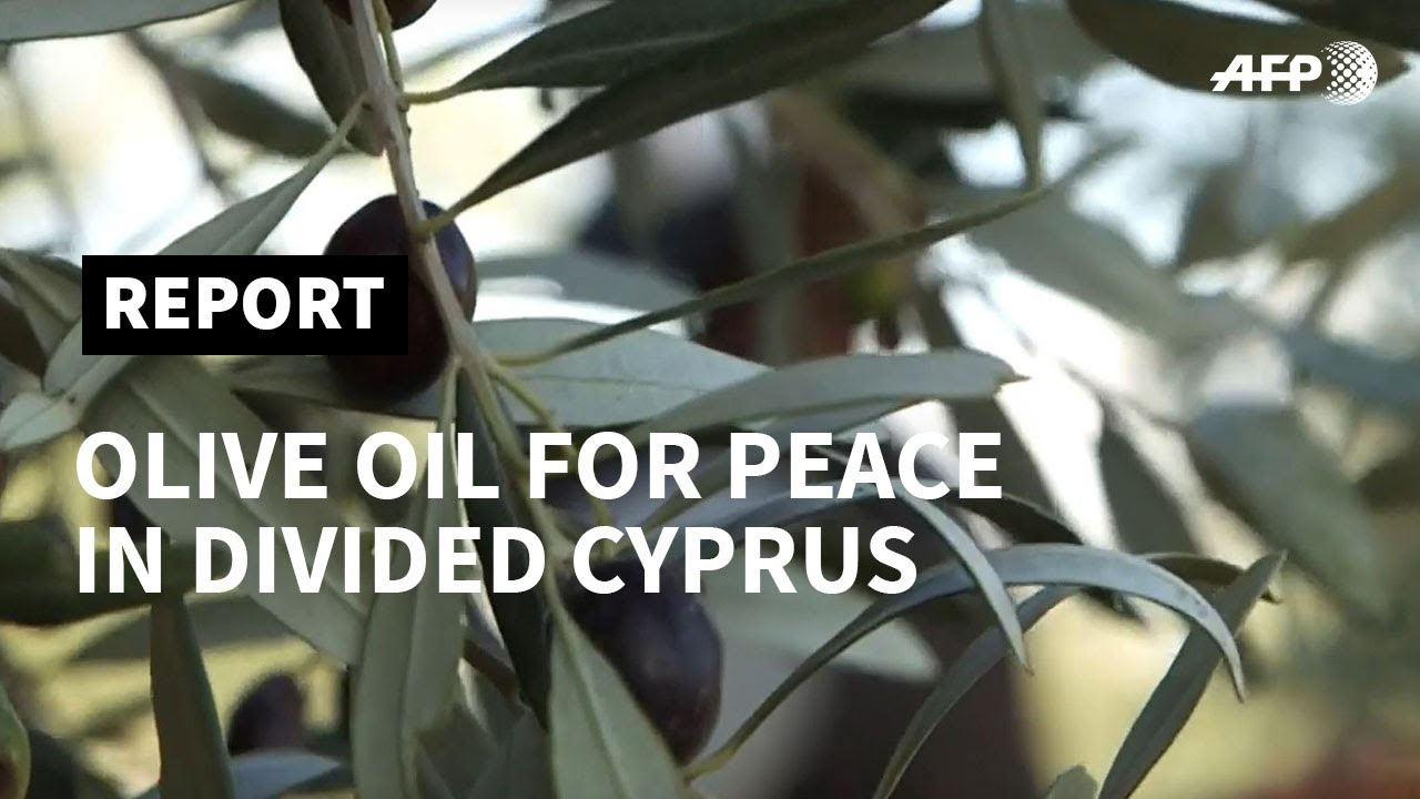 Cyprus: olive oil 'for peace' in the divided island | AFP