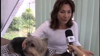 TV Feevale Notícias - Livro sobre a vida de um cão