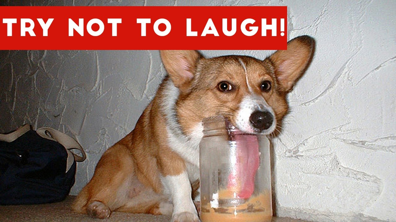Try Not To Laugh At This Funny Pet Video pilation