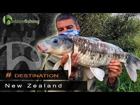 New Zealand, North Island - Koï Carp Fishing