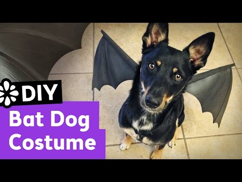 DIY Bat Dog Halloween Costume | Sea Lemon