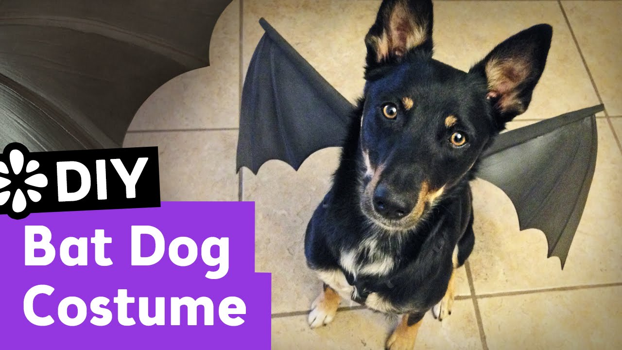 Easy do it yourself dog halloween costumes cartoonview diy bat dog halloween costume sea lemon you solutioingenieria Image collections