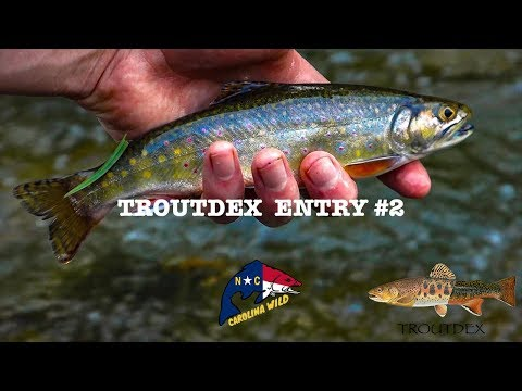 Carolina Wild- Fly Fishing Wild Trout Stream Boone, NC