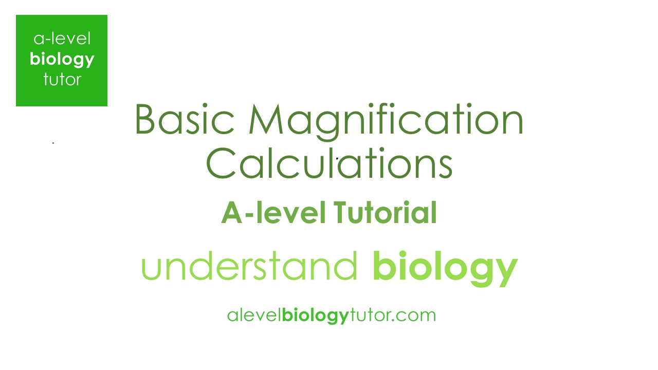 A-level Biology Questions by topic: Magnification