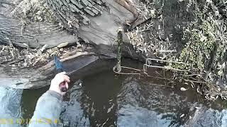 Охота на норку капканами видео 2019