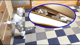 ボス吉の様子を見に行った先住猫のネコ吉でしたが、結局最後までボス吉...