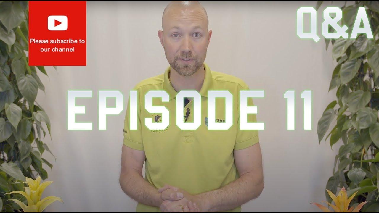 Q&A Episode 11