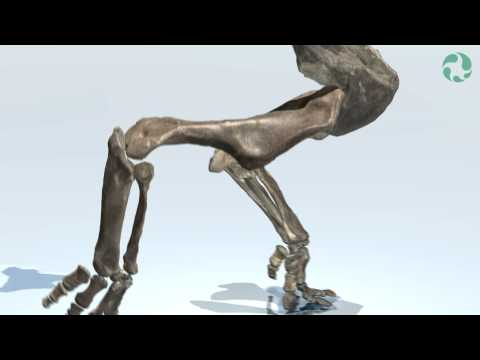 Ceratopsian Posture and Walk-cycle Animation