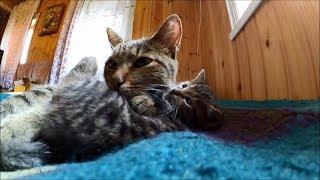А у нас сегодня кошка,  родила вчера котят // Гроза мышей!