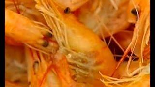 видео Лечебные свойства морской воды и морепродуктов