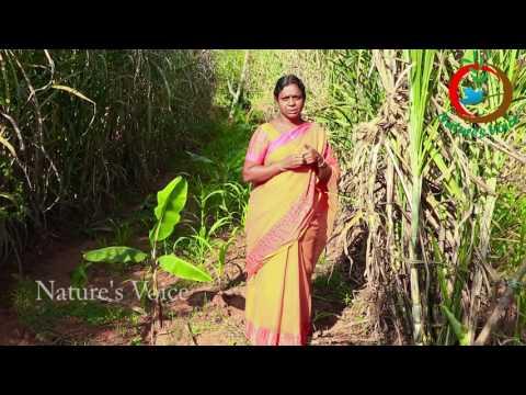 Natural Farming | Sugarcane intercropping success story(Telugu)