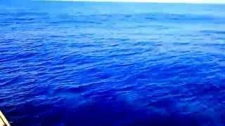Alvor Boat Trips