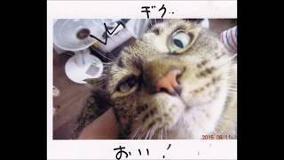 ミスター(KARA)カバーでお笑い動物動画