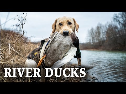 Duck Hunting Rivers | Cold Weather Duck Hunts