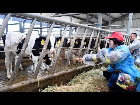 Chinese milk producer Yili expands production in New Zealand