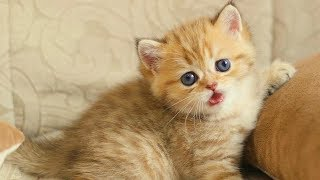 You Will Say This Is My Favorite Kitten