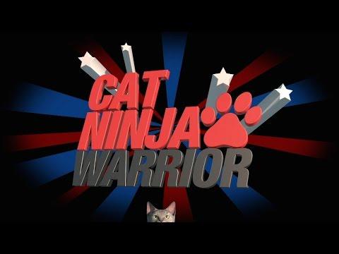 'Cat Ninja Warrior'