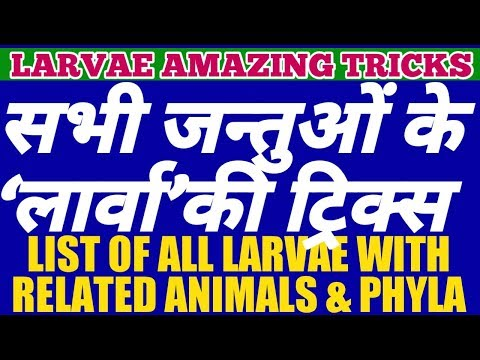 AMAZING TRICKS To MEMORIZE All LARVA, Related ANIMALS And Their PHYLA | LIST OF LARVAE OF ANIMALS.