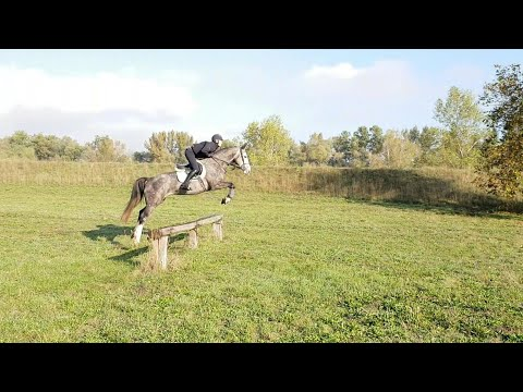 *CROSS COUNTRY TRAINING*EASY BOY, 2015, Gelding, By E-Star (Quick Star)