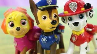 Na Plaży | Psi Patrol | Bajki dla dzieci