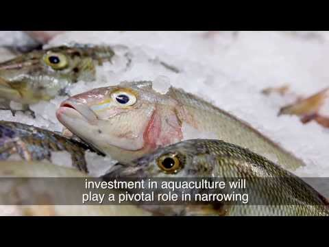 Ministry of Agriculture and Fisheries - Aqua Culture Documentary