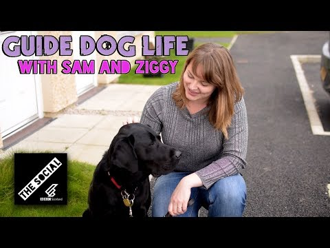 Life With Ziggy The Guide Dog
