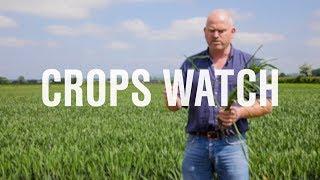 作物观察:营养对冬小麦的重要性