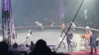 Live from the UniverSOUL Circus (Dog Act)
