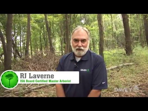 Tree Fertilizer: Which Fertilizer is Right for Your Tree?