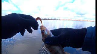 ОТВОДНОЙ ПОВОДОК в Марте 2020! Рыбалка на Оке ! Отводной поводок выручает!