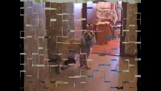 Стрижка собак липецк(Стрижка собак липецк., 2015-03-22T13:46:10.000Z)