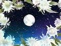 月下美人の歌 切ない愛はどこへ向かう 演歌版 トンボの作詞集