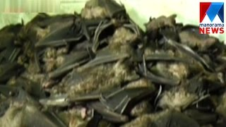 Two arrested for hunting bats in Idukki | Manorama News