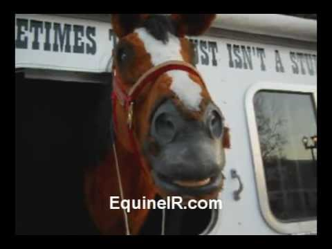 A Talking Horse Video from EquineIR - Equine Thermography Training & Marketing Network