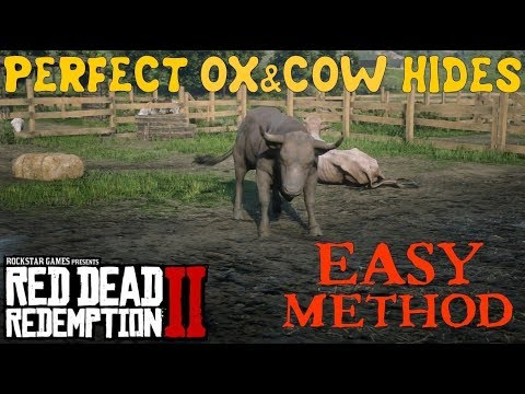 Red Dead Redemption 2 | Get EASY Perfect Ox And Cow Hides For Camp Improvement