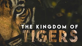 Tiger Documentary | The Kingdom of Tigers