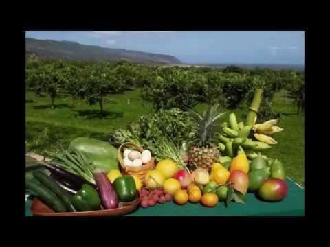 Certified Organic Farm for Sale in Hawaii