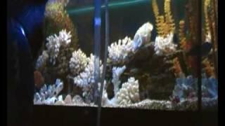 Обслуживание аквариума. Leaving an aquarium(400 литров. Цихлиды., 2010-01-23T13:53:14.000Z)