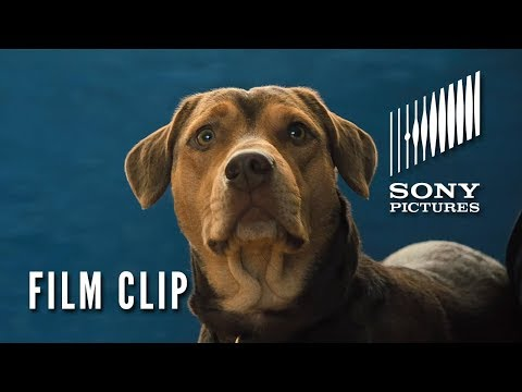 "A DOG'S WAY HOME Clip - ""New Friends"" (In Theaters Thursday)"