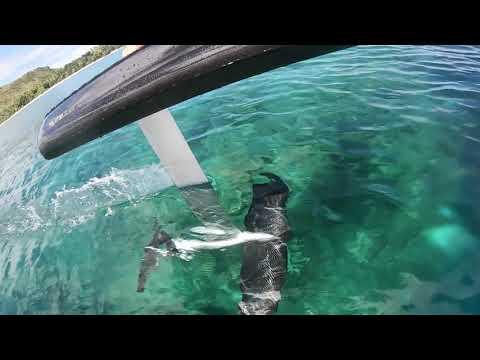 Fliteboard rental - shallow waters