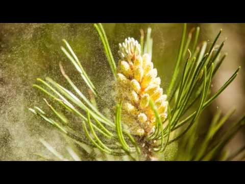 Medical Minute: What Are The Most Common Allergies In The Spring?