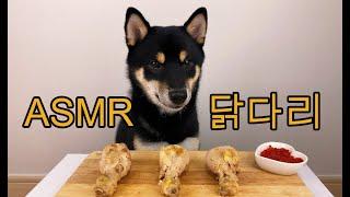 치킨 배달 왔다! 강아지 닭다리 먹방 시바견 DOG A…