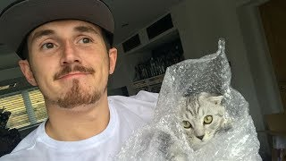 HOW TO PROTECT YOUR KITTEHY!