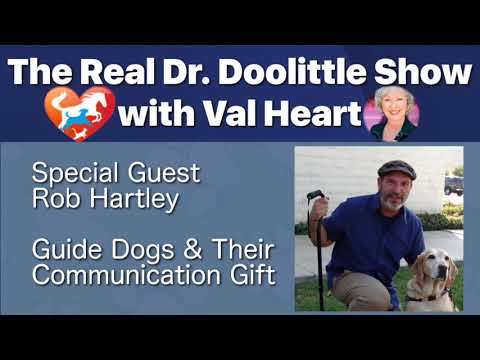 Guide Dogs & Their Communication Gift, Rob Hartley on The Real Dr. Doolittle  Show