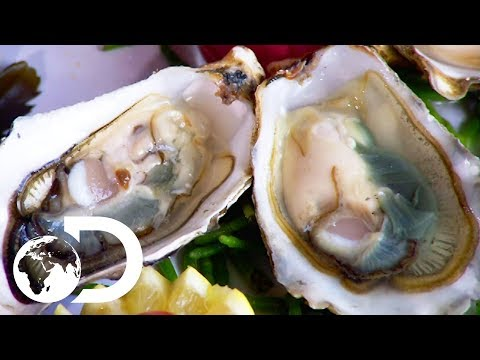 OYSTERS | How It's Made