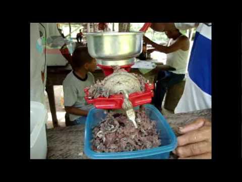 Harina de pescado pez diablo plecostomus loricaridos for Comida para tilapia
